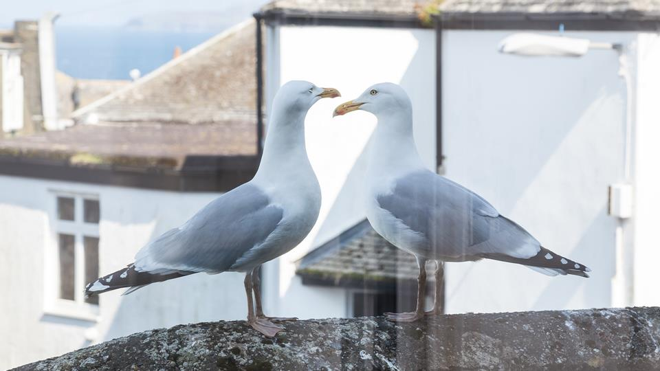 Close to the sea, you'll be able to hear the waves in the distance and the iconic sound of the seagulls!
