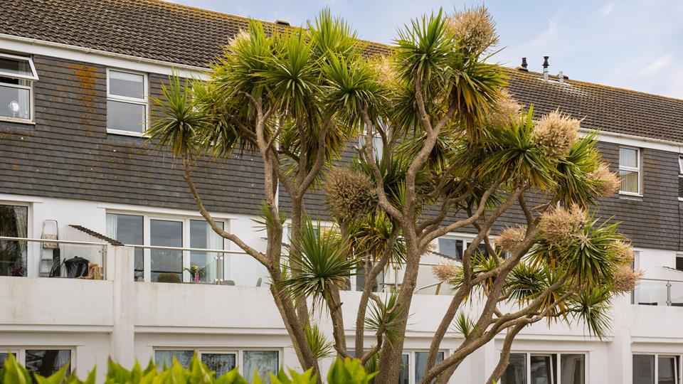 Established plants and shrubs including Cornish palms surround the building forming soft and natural outlook.