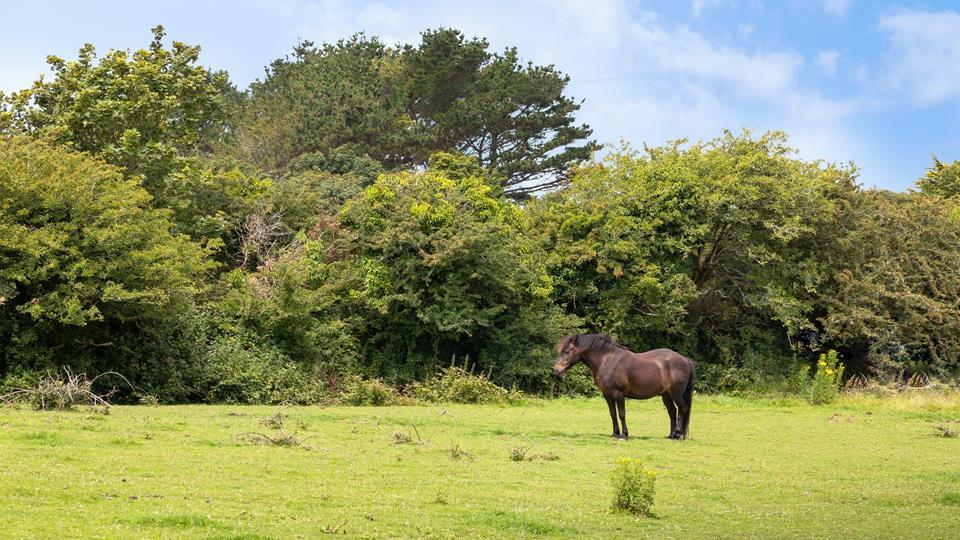 Enjoy watching the ponies graze in the paddocks.