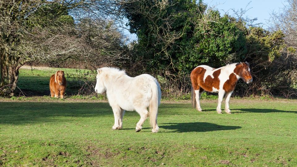 Children and adults alike are sure to be delighted by the ponies in the neighbouring field!
