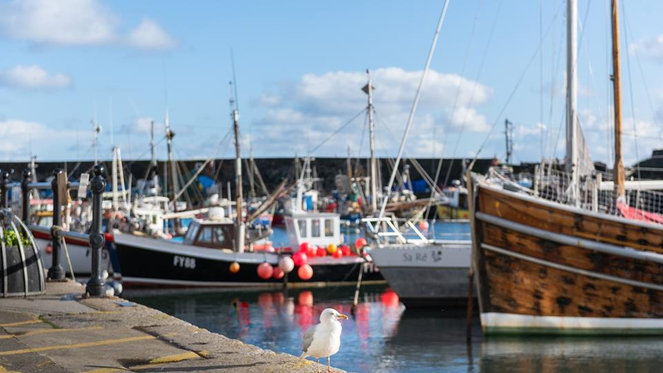 Watch out for the sneaky seagulls if you're enjoying a tasty treat near the harbour.