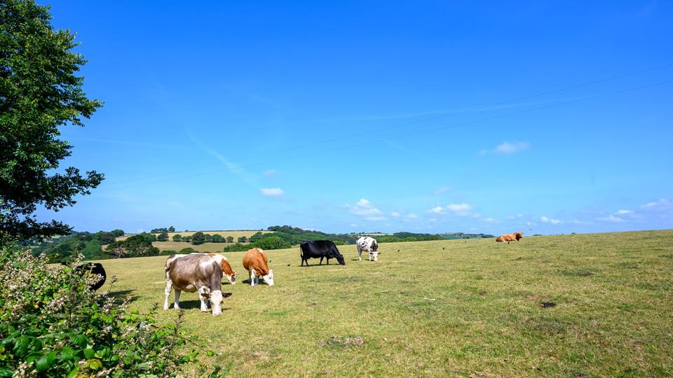 An idyllic location, expect to see local farm animals quietly grazing in the neighbouring field!