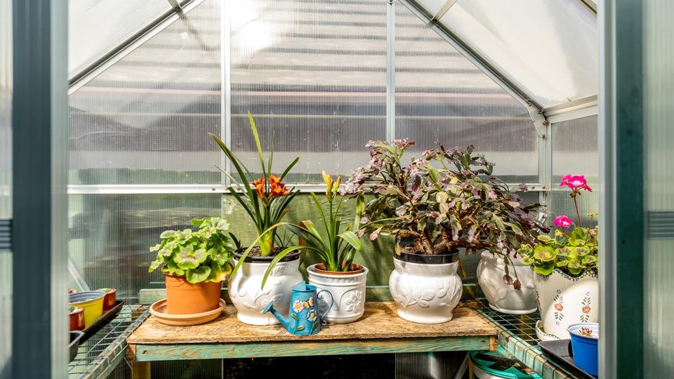 Jon's Place has a lot of love within the property and if you are missing your garden guests are welcome to tend the plants in the polycarbonate green house.